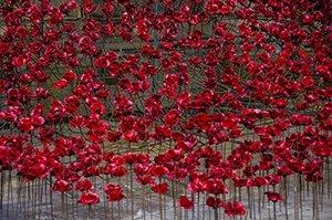 Poppies 6 web